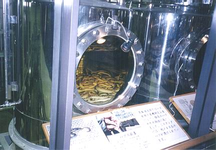 The Habu Snakes used to make the Habu Liquor