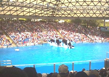 SeaWorld In Texas